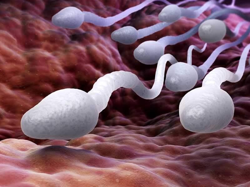 best of Air in Sperm survival