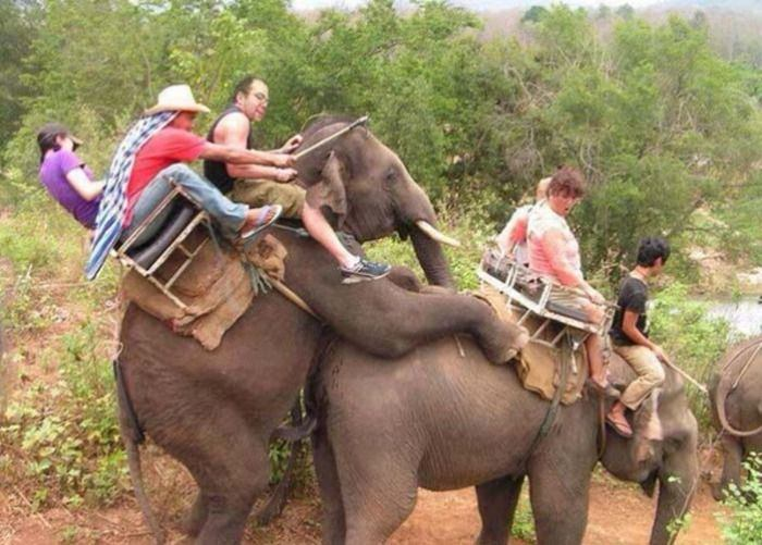 Sex With Elephant Porn